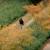Justitie nog steeds op zoek naar 'blanke schutter' Djordy Latumahina [Panorama]