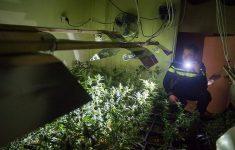Inbrekers stelen wietplanten [Crimesite]