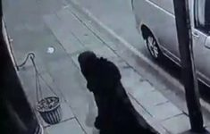 Celstraffen tot 22 jaar voor burka-bende [Crimesite]