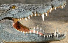 Celstraffen voor drugsbende met krokodillen [Crimesite]