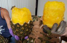 OM eist 4 jaar voor cokesmokkel met ananassen [Crimesite]